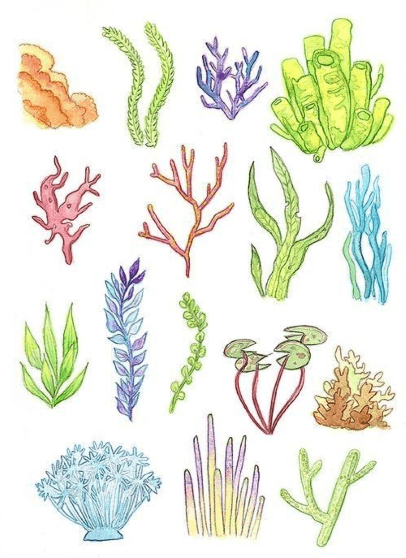 underwater painting seaweed - 655×900